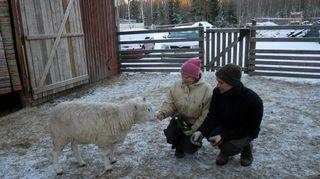 Eläinsuojelukeskus Tuulispään perustaja Piia Anttonen ja vapaaehtoistyöntekijä Heikki Simonen tervehtivät lammasta.