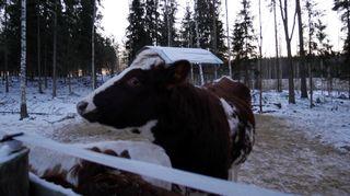 Sonni Eläinsuojelulukeskus Tuulispäässä.