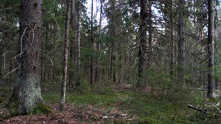Vanha metsä