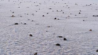 Kuolleita järvisimpukoita