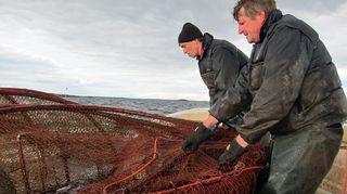 Kalastajat Viking ja poikansa Björn Kellgren