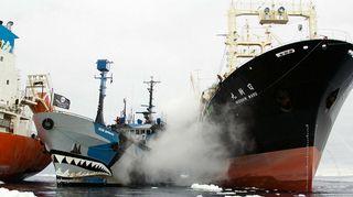 Kuvassa Sea Shepherdin aktivistit vs. japanilaiset valaanpyytäjät.