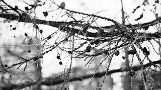 Mustavalkoinen valokuva.