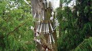 Kuvassa puu, jossa on huumeruiskuja.
