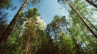 Kuva: Yle / Pentti Palmu