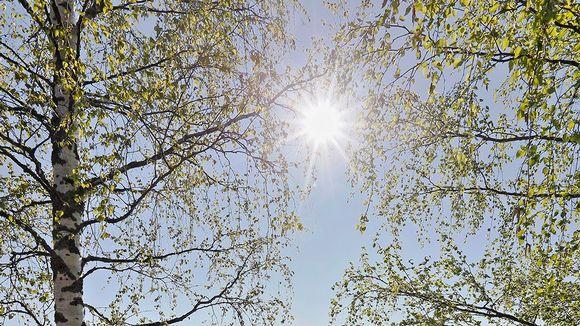 Kevätaurinko