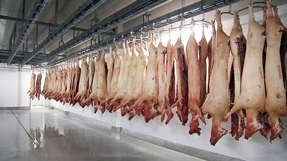 импорт свинины