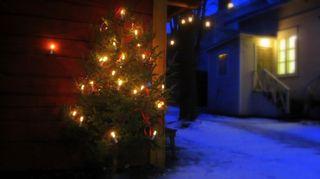 Joulukuusi Amurin työläismuseokorttelin pihassa