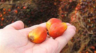 Palmuöljy
