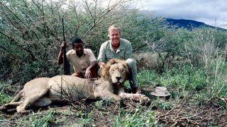 metsästäjä Jaakko Ojanperä esittelee kaatamaansa leijonaa Tansaniassa