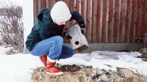 Nainen on keväthangella avannut linnunpöntön ja tyhjentää siitä pesänrakenteita