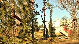 Kiipeilytelineitä vanhoissa puissa
