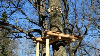 Seikkailupuiston rakenteita puussa