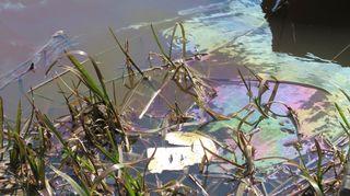 Öljyä veden pinnalla rannassa