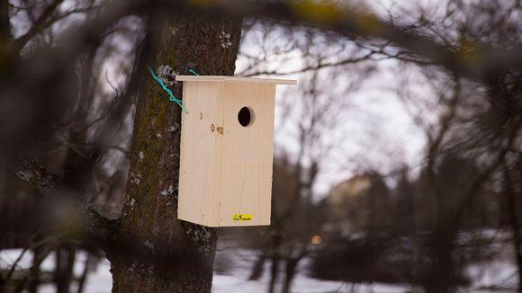Video: Linnunpönttö