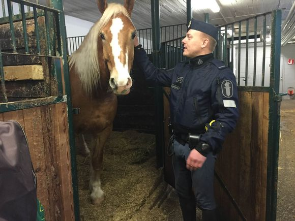 Video: Ratsupoliisi, poliisihevonen, hevonen, Ivan