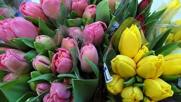 Vaaleanpunaisia ja keltaisi tulppaaneja