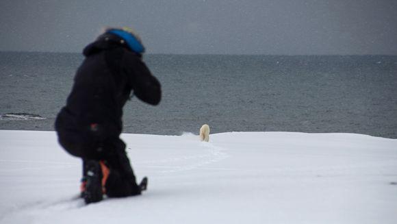 Ampuja, jääkarhu.