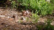 Karvaton oravanpoikanen