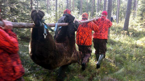 2012 ensimmäinen karhu kaatui Kivijärvellä.