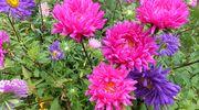 Kukkapenkkissä kukkivia kukkia.