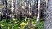 Aurinko paistaa vihreälle sammalmatolle metsässä.