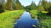 Tammijoki Luhangassa.