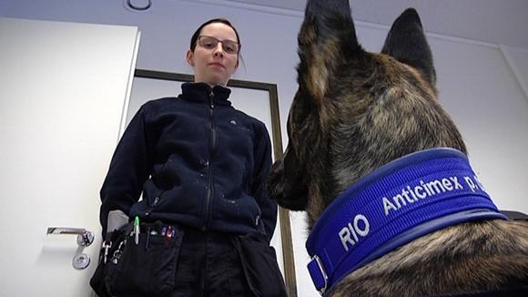 Video: Eläinkouluttaja Karita Häkkinen käyttää tilauksesta koriaansa Rioa etsimässä seinäluteita.