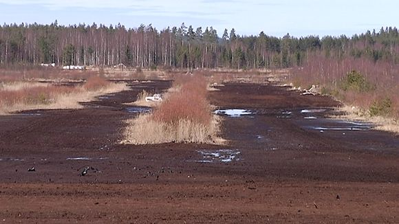 Kosteikko, pelto vai metsä – mitä tehdä entiselle turvesuolle? | Yle Uutiset | yle.fi