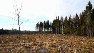 Avohakattu metsä.