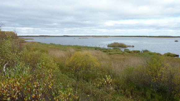 Otanmäen lintuvesialtaan pusikoituvat rannat.