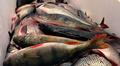 Vasta kalastettuja kotimaisia kaloja