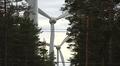 Tuulivoimalan generaattoreita näkyyy mäntyjen puiden lomasta.