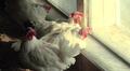 Kanat katselevat ulos kanalan ikkunasta