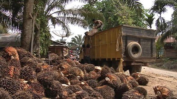 Työmiehet tropiikissa lastaavat säkkejä.