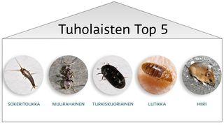 Tuholaisten top 5, joihin luettu sokeritoukka, muurahainen, turkiskuoriainen, lutikka ja hiiri.