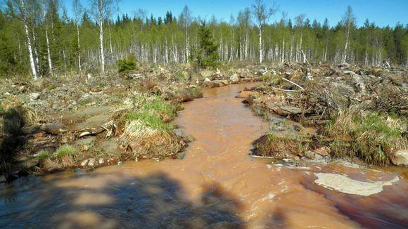joki metsän keskellä