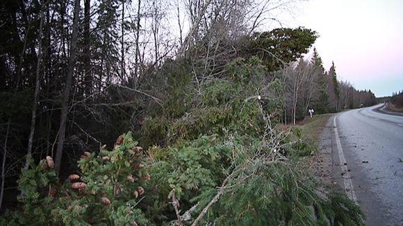 Eino-myrskyn kaatamia puita Vaasassa.