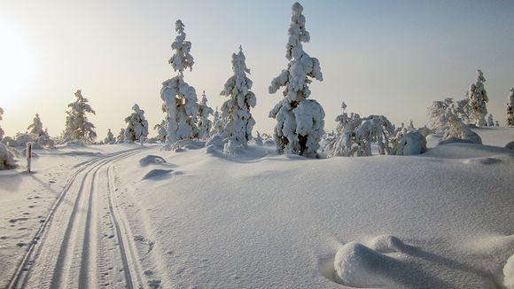 Talvinen maisema Lapissa.