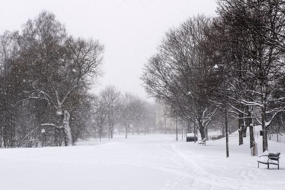 Luminen puisto Etelä-Haagassa, Helsingissä 12. tammikuuta.