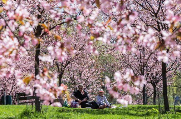 Kirsikka Tornio
