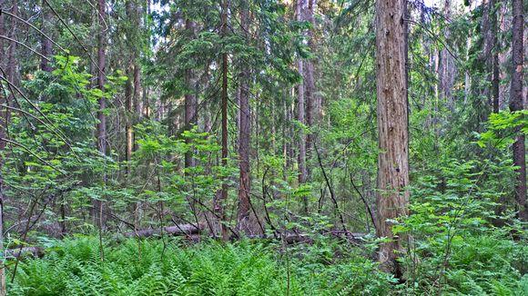 Niivermäen metsää Kouvolan ja Kuusankosken välissä.