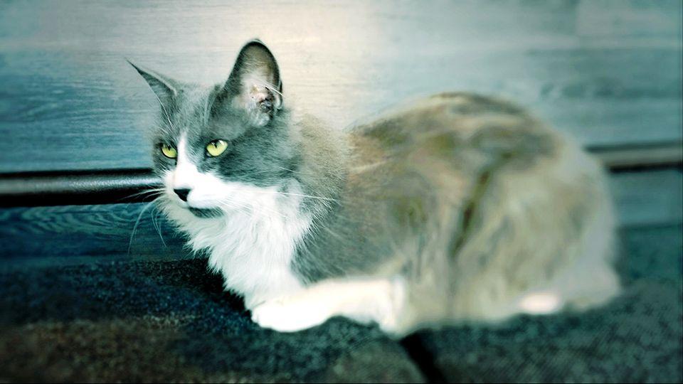 kissa tampere pelikauppa mikkeli