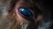 Kuolleen eläimen silmä lähikuvassa.