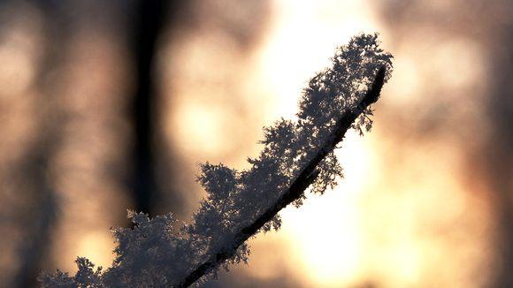 lumihiutaleita oksassa.