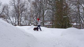 Tyttö ja koira lenkillä lumisessa puistossa