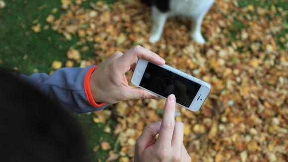 Mies kuvaa kännykkäkameralla koiraa, joka istuu keltaisten lehtien keskellä.