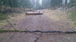Puunrunkoja Salpausselän ulkoiluväylillä.