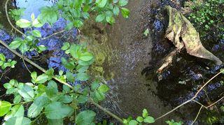 Helvetin rotkon puron vesi on kirkasta.