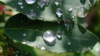 Sadepisaroita lehdillä